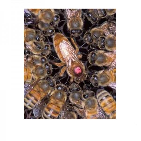 Βασίλισσες Μελισσών  - Μάνες